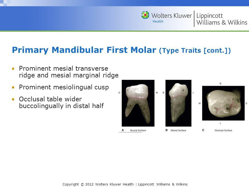 Mandibular 1st Molar Anatomy Gallery - human body anatomy